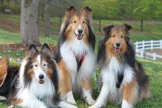 My three sons, Jasper, Jax and Bryce
