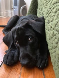 Why do so many people like Labrador ? by L&G PET Many people now keep a Labrador when choosing a companion dog. Cute Dogs And Puppies, Lab Puppies, I Love Dogs, Doggies, Cutest Dogs, Cute Funny Animals, Cute Baby Animals, Animals And Pets, Raza Labrador