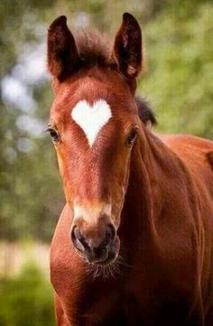 I wonder if this is the foals real marking? I wonder if this is the foals real marking? Funny Horses, Cute Horses, Pretty Horses, Horse Love, Cute Little Animals, Cute Funny Animals, Cute Dogs, Most Beautiful Horses, Animals Beautiful