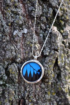 Real Blue Swallowtail Butterfly Wing Pendant Necklace by InsectArt, $28.00