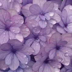 This shade of violet has a diluted chroma. The value is darker toward the center of the petals, but lighter toward the edges. I can see a lot of blue in this shade of violet. Violet Aesthetic, Lavender Aesthetic, Rainbow Aesthetic, Aesthetic Colors, Flower Aesthetic, Aesthetic Style, Color Lila Pastel, Violet Pastel, Pink Lila