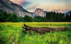 Scarica sfondi usa, rocce, erba verde, foresta, campo, montagne, ca, prato, parco nazionale, registro, yosemite