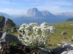 cool Selva Di Val Gardena Mountain
