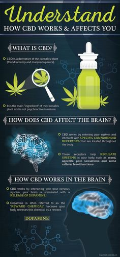 Looking Whole Plant CBD Oil or CBD Paste? Amma Life leads the way in supplying CBD health supplements grown in the EU. High in Cannabidiol our CBD Oils have been independently lab tested. Cannabis Plant, Cannabis Oil, Medical Cannabis, Endocannabinoid System, Cbd Hemp Oil, Oil Benefits, Health Benefits, Back Pain, Medical Marijuana