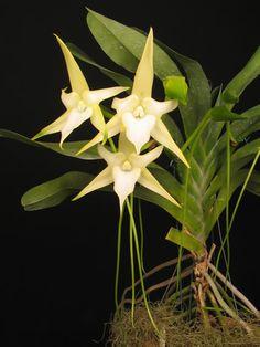 SP sediará exposição de orquídeas                                                                                                                                                                                 Mais                                                                                                                                                                                 Mais