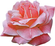 valentina_touchofroses_el41.png