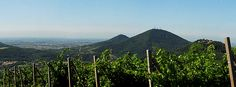 Una gita sul Monte Fasolo, sognando ad occhi aperti il ritorno della primavera...    A trip to Monte Fasolo, daydreaming about the return of spring ...