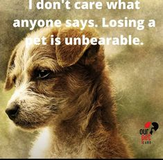 Dog Grief, Grief Loss, Animal Facts, Animal Quotes, Chihuahuas, Yorkies, Goodbye Poem, Animals And Pets, Cute Animals