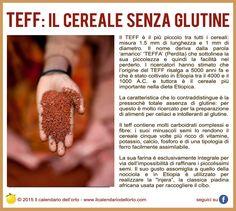 TEFF: il cereale senza glutine