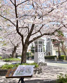 🌿✨ * スケッチの桜風景🌸 お気に入りの風景をじっくり描く… 素敵な時間ですよね😊 * 時々、桜吹雪となり皆さん花弁をつけていました🌿✨ * もう少しお花見楽しみたいですね😊 良い週末をお過ごしください🌸 * (📷2018.3.29) * #桜 #横浜… Yokohama, Plants, Plant, Planets
