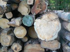 Close up of our Logs!