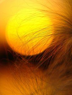 Best Sun Set
