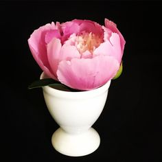 In This Moment, Rose, Flowers, Plants, Photography, Pink, Photograph, Fotografie, Photoshoot
