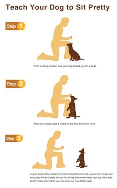 Teach your dog how to sit pretty.