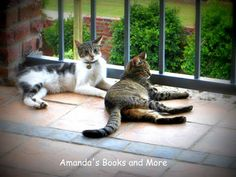 Our 2 Cats and a #WW #BlogHop ~ Amanda's Books and More... http://abooksandmore.blogspot.com/2014/03/cats-concerts-and-more.html