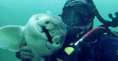 Casi todos les tenemos pavor a los tiburones, pero ese no es el caso de Rick, un buzo que ha construido una gran amistad con una pequeña hembra de tiburón