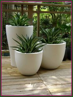 Patio Plants, Cool Plants, Indoor Plants, Pots For Plants, Large Succulent Plants, Succulents Garden, Garden Pots, Succulent Gardening, Front Yard Landscaping