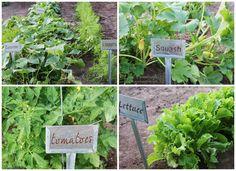 dream big, help, dreams, garden 101, garden bloom, gardens, gardening