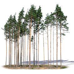 A cutout group of pine trees Tree photoshop, Pine tree drawing, Plants, Tree illustration, Tree draw Plant Painting, Plant Drawing, Painting Trees, Landscape Architecture Drawing, Architecture Graphics, Tree Psd, Tree Photoshop, Landscaping Trees, Tree Illustration
