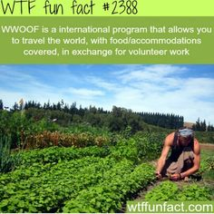 - WWOOF is a international program that allows you to travel the world, with food/accommodations covered, in exchange for volunteer work by leila Cool Places To Visit, Places To Travel, Travel Destinations, The Farm, Wtf Fun Facts, Random Facts, Crazy Facts, Funny Facts, All Nature