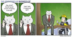 A cat as CEO