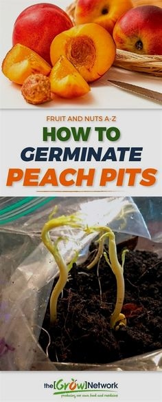 How to Germinate Peach Pits (and Why You Should)