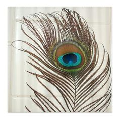 Peacock Shower Curtain 2