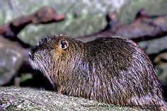 Unfazed In Fur--Hedgehog Tales!