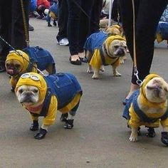 minion puppies!