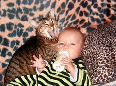 Bringing home baby into your pet household #petproblemsolved