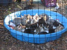 cat sanctuary images - Google Search