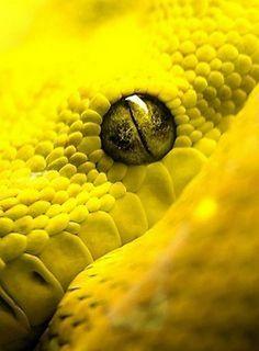 La théorie du tout: Les écailles jaunes (en 4 serpents)