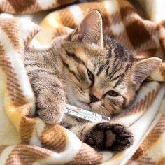Ameliyat Sonrası Kedi – Suzi'nin Tedavi Süreci