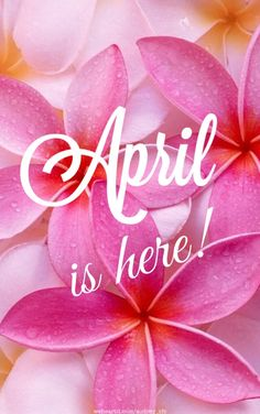 April is here!April is here! April is here! Hello APRIL - Poem by Sunshine Smile Image de summer, june, and hello APRIL - You make all things new Seasons Months, Days And Months, Months In A Year, Spring Months, 12 Months, Happy Birthday Cards, Birthday Wishes, April Images, Welcome December Images
