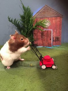 A hamster-loving woman has taken entertaining her pets to a whole new level. Not content with wheels and tubes for them to play with, Beverly Bovrill, 49, from Devizes in Wiltshire, likes to spend her time building miniature sets for her six hamsters to inhabit. Her creations include a hamster sized-Great British Bake Off tent, a snooker table and an adorably small living room.