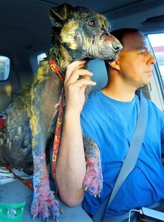with Bethany, just after she was first rescued. | Rescuing Bethany, A Homeless Dog Who'd Almost Lost Hope