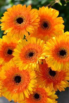 Amazing Flowers, My Flower, Wild Flowers, Beautiful Flowers, Orange Plant, Flower Phone Wallpaper, Good Morning Flowers, Pretty Wallpapers, Orange Flowers