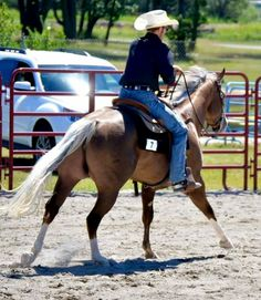 10 Quick Tips - Ranch Riding