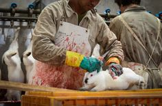 your fur coat being made..you selfish ugly bastards