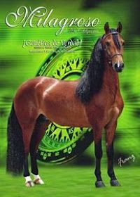 Beautiful Horses, Equestrian, Animals, Horses, Orange Trees, Library Ideas, Animal Babies, Pets, Pretty Horses