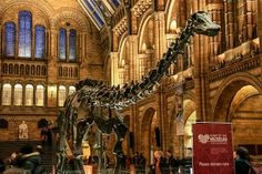 The Best London Museums that are Free-entry