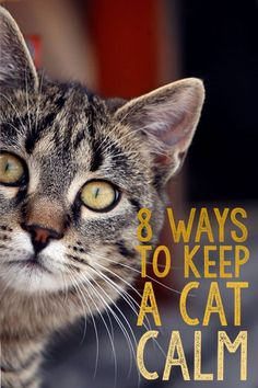 Do you have a scaredy cat? Does your feline friend get stressed during car rides, thunderstorms, trips to the vet, or when you have guests in your home? Not only are anxious kitties unhappy, their behavior can be unpredictable. Here are 8 things you can try to help keep your kitty cat calm.
