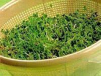 Cantinho Vegetariano: Como cultivar brotos em casa