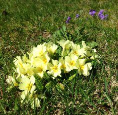 Frühlingsboten Plants, Plant, Planets