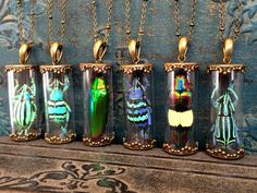 Real Insect jewelry weevil jewel beetle necklace terrarium necklace pendant bug jewelry entomology the beatles amber insect taxidermy by ChrysalisStudios on Etsy https://www.etsy.com/listing/257118441/real-insect-jewelry-weevil-jewel-beetle