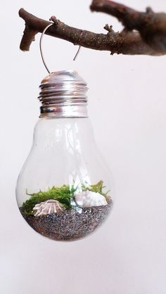 Mini-Terrarium inside an old lightbulb. I had so much fun, I made seven! One of my most beautiful upcycling projects.  DIY