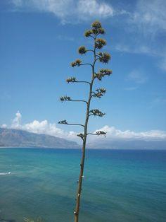 Balestrate Sicily