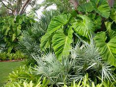 Mix of textures, shapes, and colors.  Cornfeld Garden   Raymond Jungles, Inc.