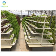 Source Good Quality A type Vertical NFT Hydroponic System for Greenhouse Lettuce on m.alibaba.com