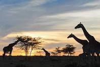 Kenya! I would love to go on a safari